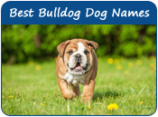 Best Bulldog Names