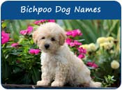 Bichpoo Dog Names