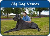 Big Dog Names