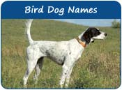 Bird Dog Names