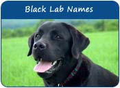 Black Lab Dog Names