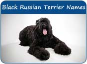 Black Russian Terrier Dog Names