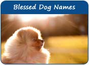 Blessed Dog Names