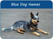 Blue Dog Names