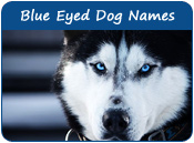 Blue-Eyed Dog Names
