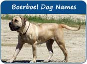 Boerboel Dog Names