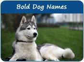 Bold Dog Names
