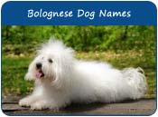 Bolognese Dog Names