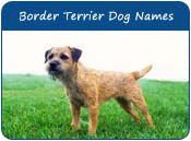 Border Terrier Dog Names