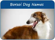 Borzoi Dog Names