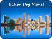Boston Dog Names