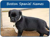 Boston Spaniel Dog Names
