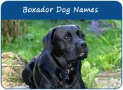 Boxador Dog Names