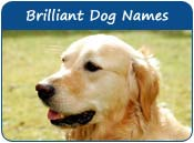Brilliant Dog Names