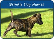 Brindle Dog Names