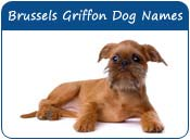 Brussels Griffon Dog Names