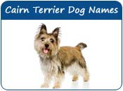 Cairn Terrier Dog Names