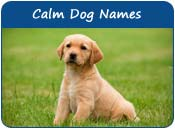 Calm Dog Names