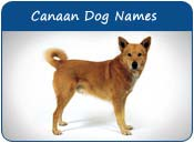 Canaan Dog Names