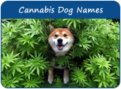 Cannabis Dog Names