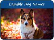 Capable Dog Names
