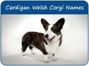 Cardigan Welsh Corgi Dog Names