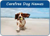 Carefree Dog Names