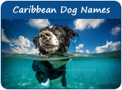 Caribbean Dog Names