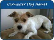 Carnauzer Dog Names