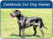 Catahoula Cur Dog Names