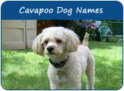 Cavapoo Dog Names