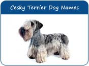 Cesky Terrier Dog Names
