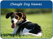 Cheagle Dog Names