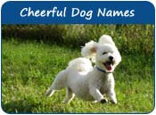 Cheerful Dog Names