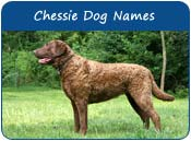 Chesapeake Bay Retriever Dog Names
