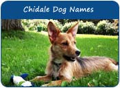 Chidale Dog Names