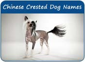 Chinese Crested Dog Names, Names For Crested Puppies, Page 1