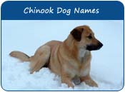 Chinook Dog Names