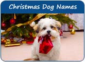 Christmas Dog Names