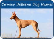 Cirneco Delletna Dog Names