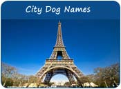 City Dog Names