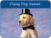 Classy Dog Names