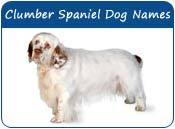 Clumber Spaniel Dog Names