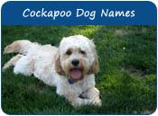 Cockapoo Dog Names