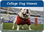 College Dog Names