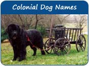 Colonial Dog Names