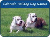 Colorado Bulldog Dog Names