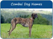 Combai Dog Names