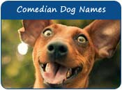 Comedian Dog Names