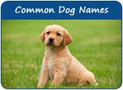 Common Dog Names